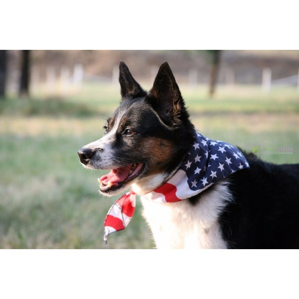 foulard bandana pour chien am rique usa canada angleterre italie france. Black Bedroom Furniture Sets. Home Design Ideas